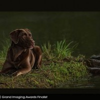 2018 Grand Imaging Awards Second Place Animals: FOCUS