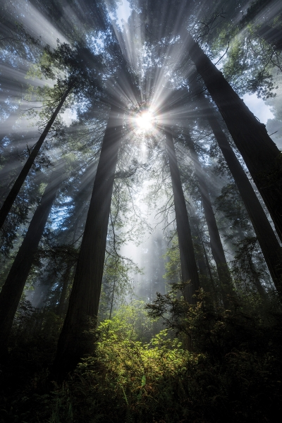 Ian Plant Blazes His Own Trail in Nature and Landscape Photography, Ian Plant, nature and landscape photographer