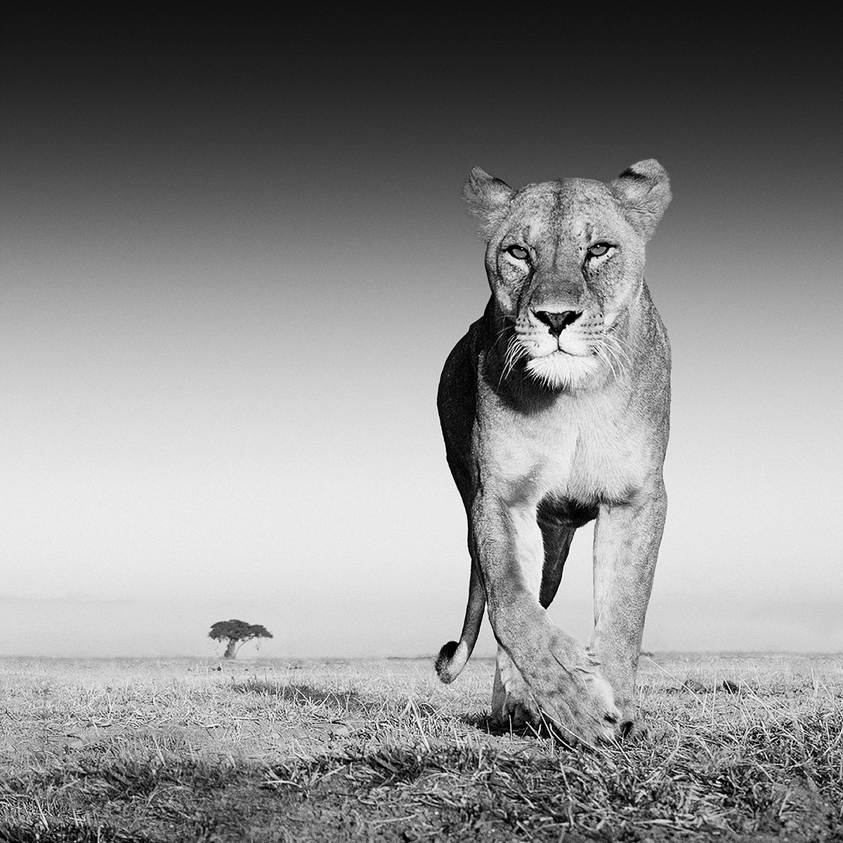 wildlife photography from the ground up, david yarrow wildlife photography