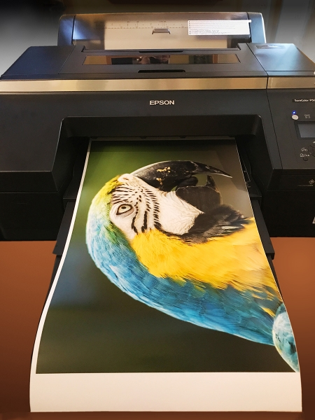Epson SureColor P5000 with a 17x25-inch print, output on Ultra Premium Photo Paper Luster