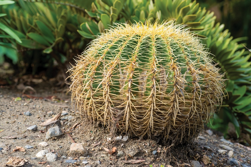 I was able to photograph a ground-level four-exposure focus stack of a barrel cactus and stay high and dry by using the CamRanger 2 to control the shot.